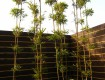 竹林とオリジナルウッドフェンス/あわら市D様邸