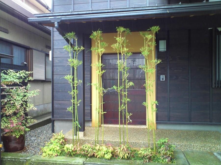 竹林のあるアプローチ/福井市Y様邸