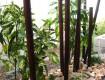 防虫加工の天然竹で坪庭を演出/福井市K様邸