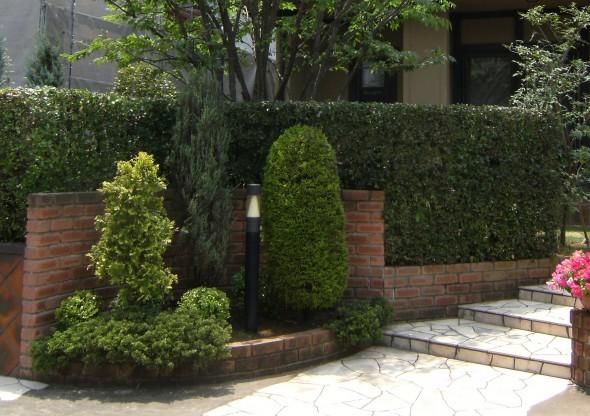 ウバメガシ(常緑)の生垣